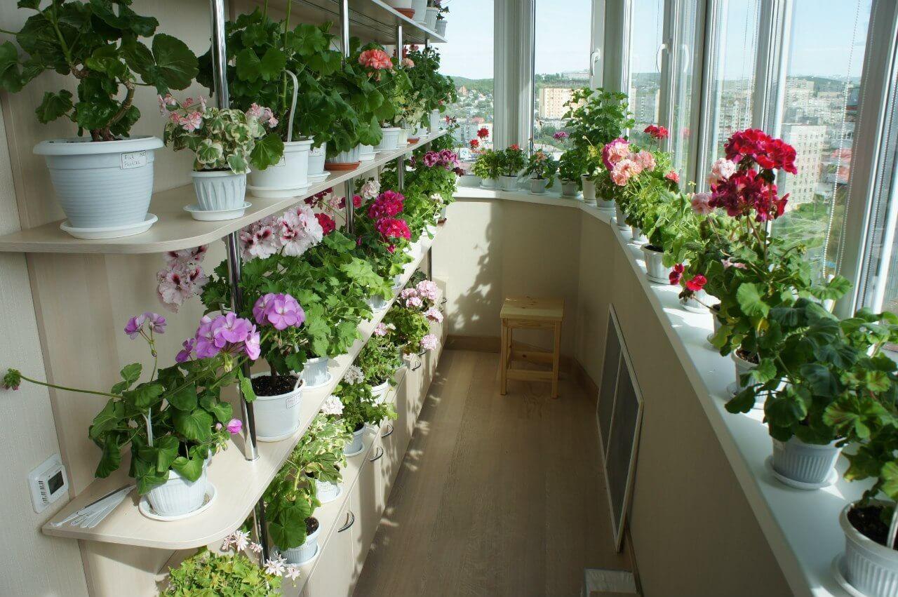 Какие цветы выбрать для балкона?
