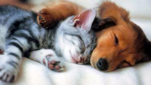 Тест: Какое ваше домашнее животное?