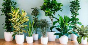 Тест: Вы в растениях разбираетесь?