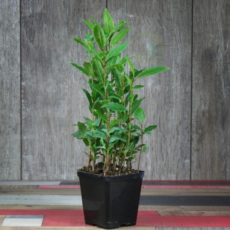 4 растения для спальни, которые сделают сон здоровым