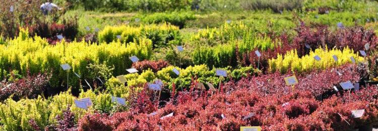 Садовый питомник растений Gardenflorann.ru