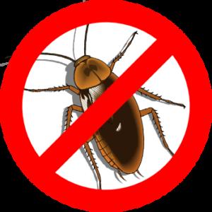 Тараканы в квартире: как избавиться от них навсегда?