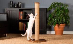 Критерии выбора когтеточки для котенка